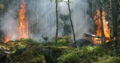 ГСЧС объявила чрезвычайный уровень пожарной опасности почти во всех регионах