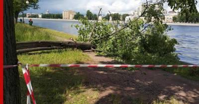 """Циклон """"Кийан"""" принесет в Петербург дожди и штормовой ветер"""