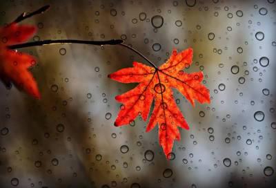 Во вторник в Ленобласти ожидаются дожди и сильный ветер