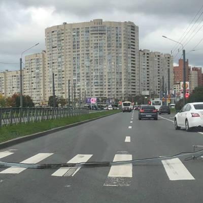 Более 60 деревьев повалил сильный ветер в Петербурге