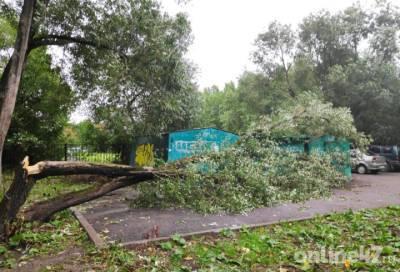 Штормовой ветер в южной части Петербурга сломал и «уложил» дерево на гаражи