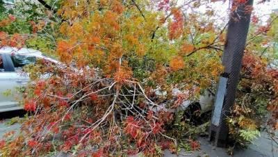 Поваливший более 60 деревьев ураганный ветер продержится в Петербурге ещё сутки