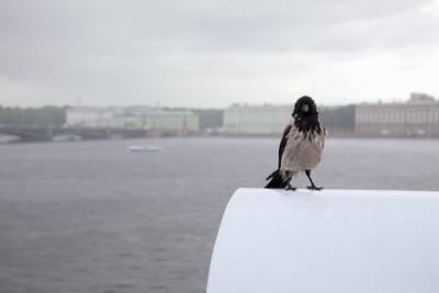 Ураганный ветер в Петербурге продержится до 15 сентября 2021 года