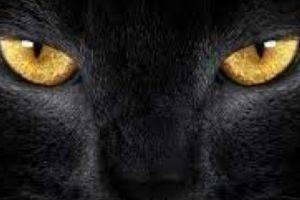 Самые популярные поверья, связанные с черной кошкой
