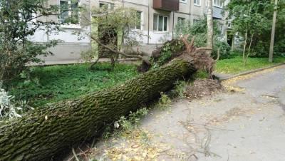 Штормовой ветер повредил десятки деревьев в Петербурге