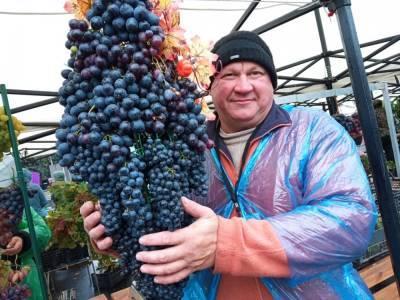 Самую большую гроздь винограда выберут в Липецке