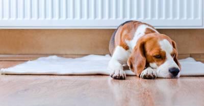В Даугавпилсе отопление во всех домах будет включено в среду