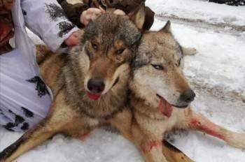 Осенне-зимний охотничий сезон стартовал в Вологодской области