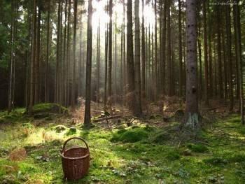 В лесах Вологодской области продолжают исчезать люди