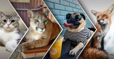 Хвостатые блогеры. Самые популярные животные в соцсетях