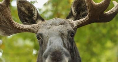 Latvijas Valsts ceļi потратили 170 000 евро на устройства для отпугивания диких зверей: аварий меньше не стало