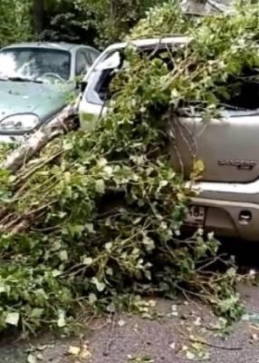 От упавших деревьев в Липецке пострадали три машины и трубопровод