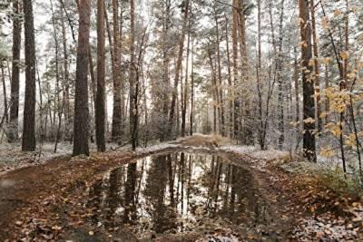 В Челябинской области по факту двойной смерти на охоте возбудили уголовное дело