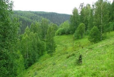 Сосны, дубы и березы: в Липецкой области увеличилась площадь лесов