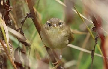В Беларуси появился еще один новый вид птиц