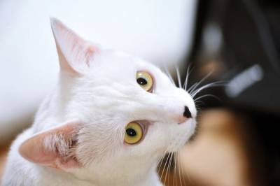 В Липецкой области прохожие спасли запертую в квартире кошку