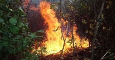 В некоторых регионах Украины объявили чрезвычайный уровень пожарной опасности